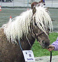 Sweet Pea at mare inspection 2005