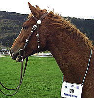 Wyoming Dream at young stock inspection 2005